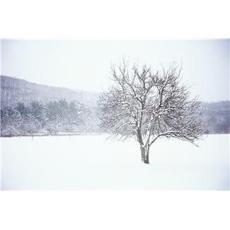 Tree in winter landscape